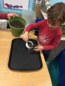 kindergarten plants
